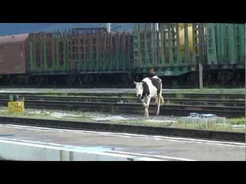 Trans Mongolië Express 2011 deel 1