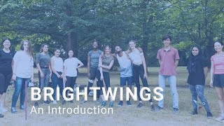 Brightwings | An Introduction