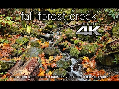 4K ULTRA HD Nature Scene: Fall Oregon Creek 1 Hour Fine Art Video Wallpaper