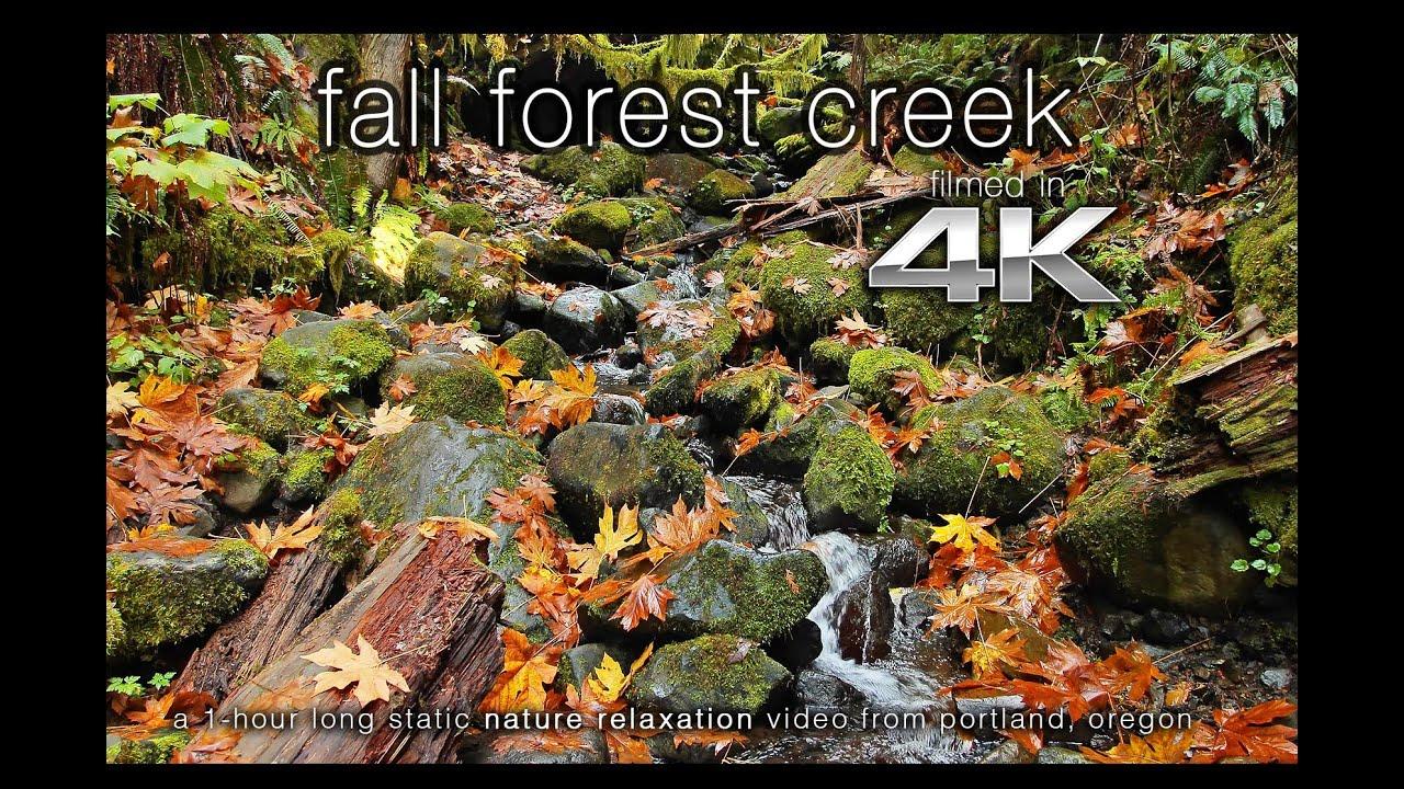 4k Ultra Hd Nature Scene Fall Oregon Creek 1 Hour Fine Art Video Wallpaper Youtube