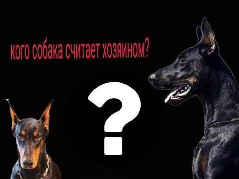 Как понять кого щенок считает хозяином