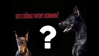 Как понять, кого собака считает хозяином?