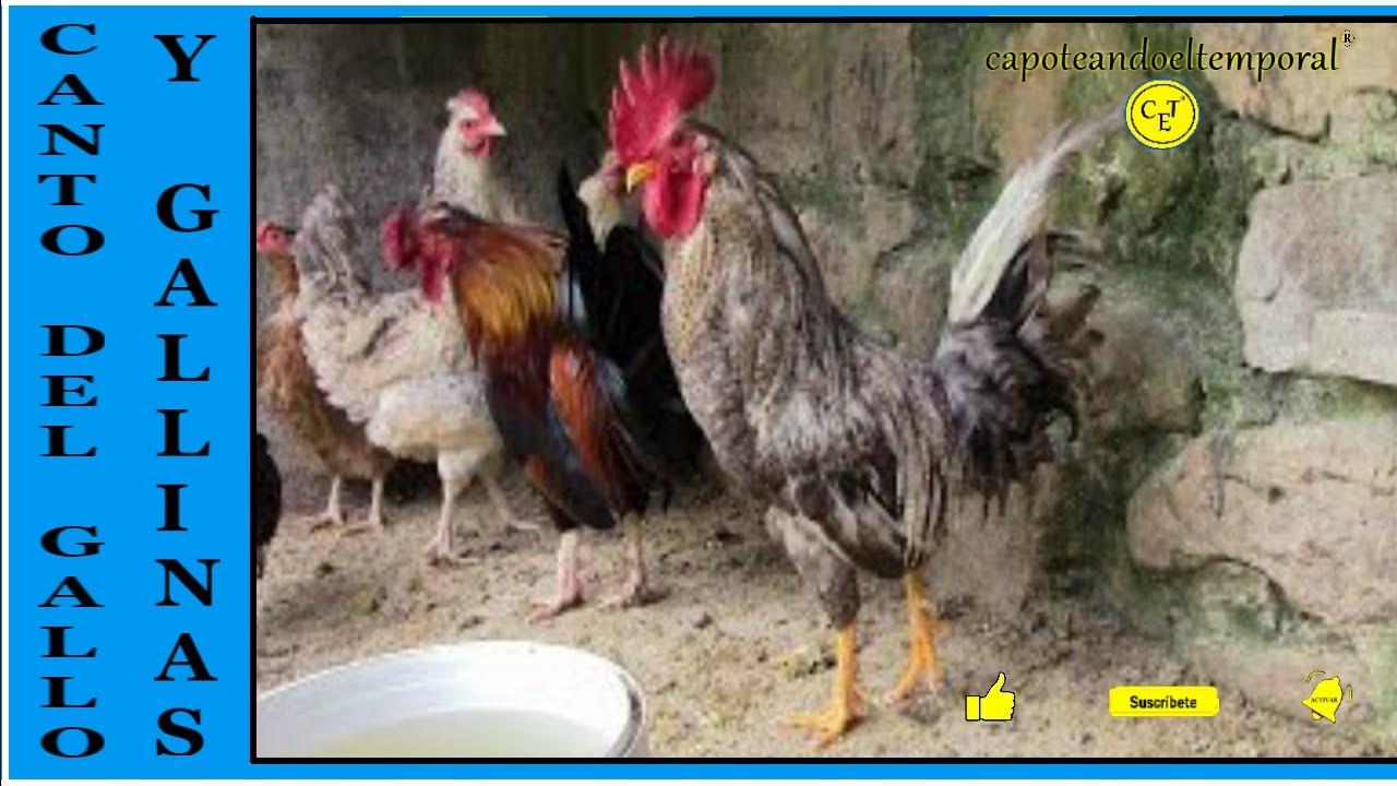 mdhsh Aves de Corral Bebidas para Beber de Agua Pl/ástico Aves de Corral Gallinero P/ájaro Bebedor autom/ático