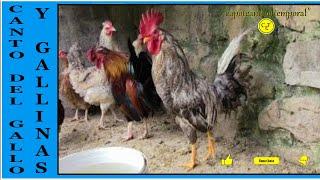 EL CANTO DEL GALLO Y GALLINAS (sonidos de corral )/The cock ...