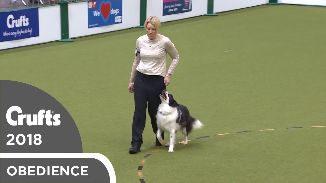 Obedience - Dog Championship - Part 6   Crufts 2018