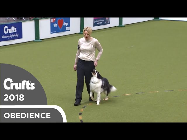 Obedience - Dog Championship - Part 6 | Crufts 2018