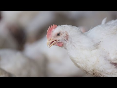 Tackling AMR in Bangladesh – a One Health approach