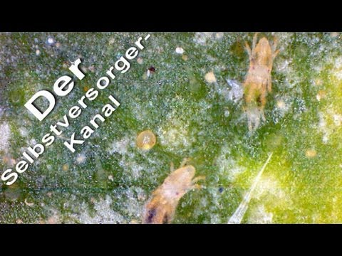 Gurkenanbau Im Gewachshaus Youtube