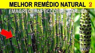 Conheça Uma das Plantas Mais Incríveis que Trata mais Doenças que Qualquer outra