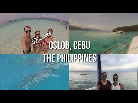 OSLOB WHALE SHARK WATCHING & SUMILON ISLAND | TRAVEL THE PHILIPPINES