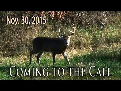 Midwest Whitetail | Calling In Whitetail Deer