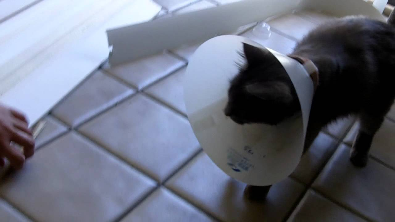 Cat stuck in Lampshade - YouTube