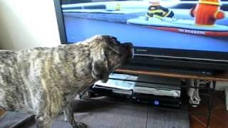 Englisch Mastiff Bellen auf DVD Cartoon Hund
