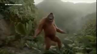 Video Goyang dumang versi orangutan download MP3, 3GP, MP4, WEBM, AVI, FLV Juli 2018