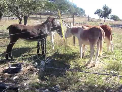 Donkey First Meeting thumbnail
