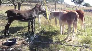 Donkey First Meeting