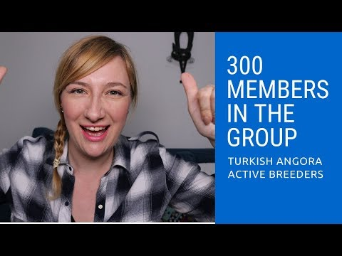 We are 300 in the group! Turkish Angora Cats Active Breeders rocks!
