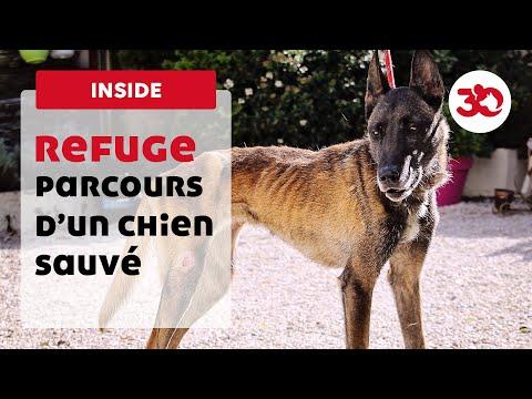 Parcours d'un chien sauvé par la Fondation 30 Millions d'Amis
