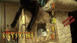 Когтеточка самодельная . + дом для кошек !