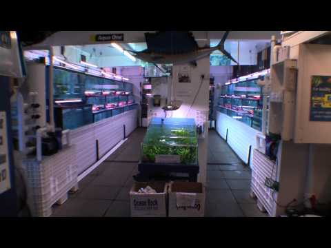 Wavertree Nook Aquarium Shop Tour