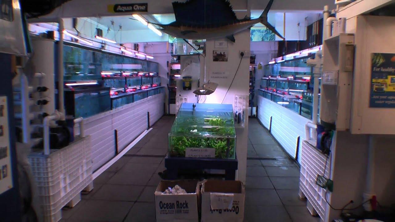 Wavertree nook aquarium shop tour youtube for Fish town usa