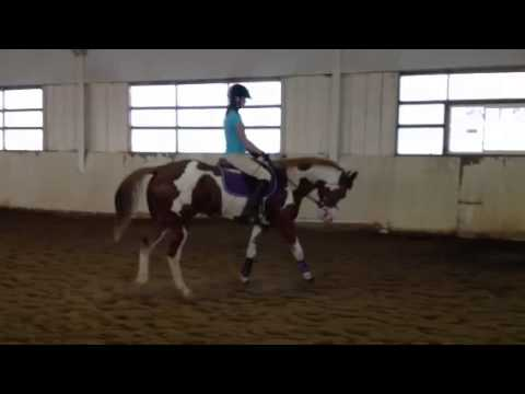 Sorrel Overo Quarter Horse Gelding for Sale