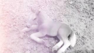 Фото лошадей шляйх под музыку