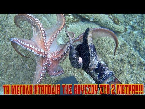 !!! - big octopus coming!!!