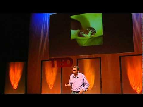 Jonathan Drori: The beautiful tricks of flowers