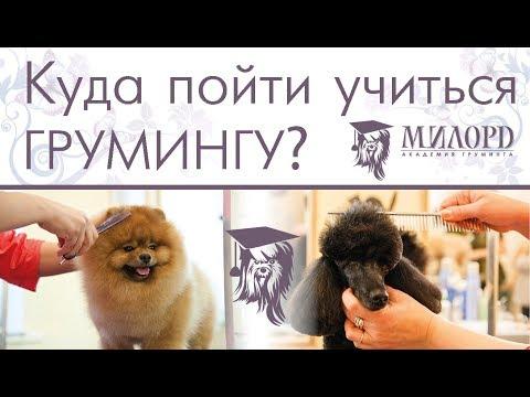 Курсы груминга. Обучение грумингу. Обучение стрижке собак