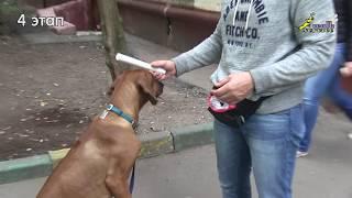Добавление механики к кликеру при обучении собаки апортировке