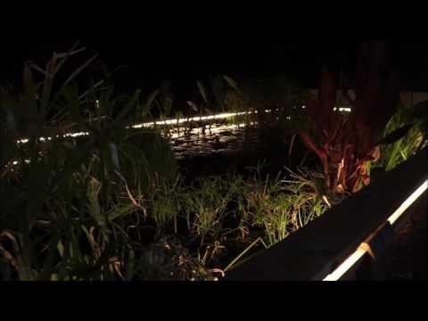 Motorbike frog song