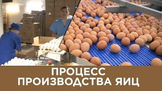 Процесс производства яиц