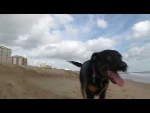Virginia Beach Is For Pet Lovers