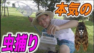 【夏休み】大人が本気で虫捕りしたら何種類集まる!?