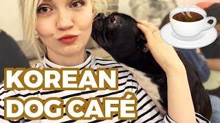 🐶 Cutest Dog Café in Seoul