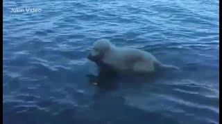 شاهد.. فيديو لكلب ينقذ غزالًا من الغرق يجتاح الفيسبوك
