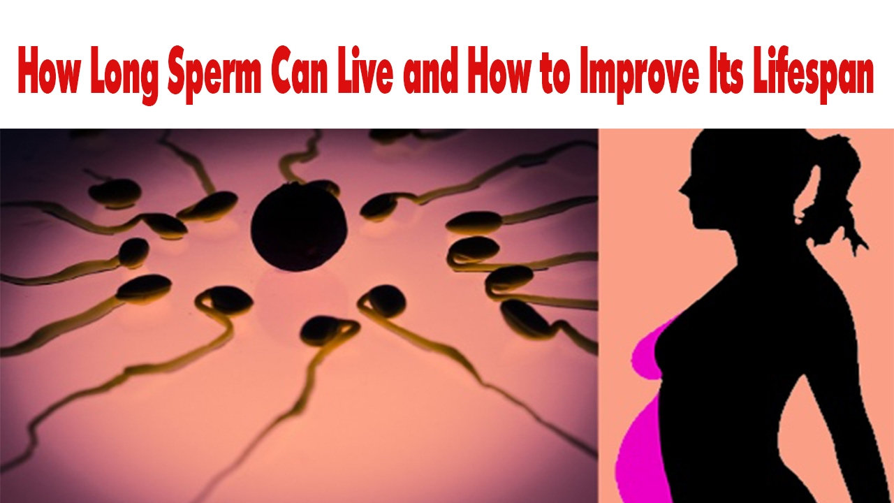 Something life span of sperm in the female body agree, rather