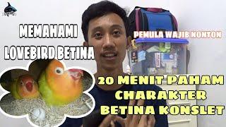 Download lagu CARA MEMAHAMI LOVEBIRD BETINA AGAR CEPAT KONSLET