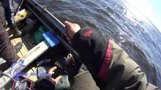 31 марта Мишурин Рог мини отчет по джиговой рыбалке
