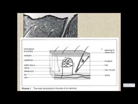 Thermoregulation for IGCSE Biology
