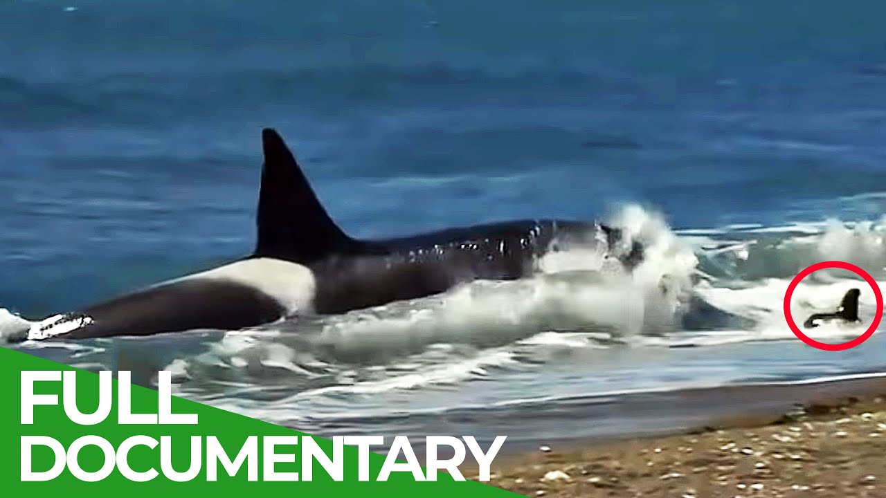 Patagonia: The Fascinating Diversity of Animals | Free Documentary Nature