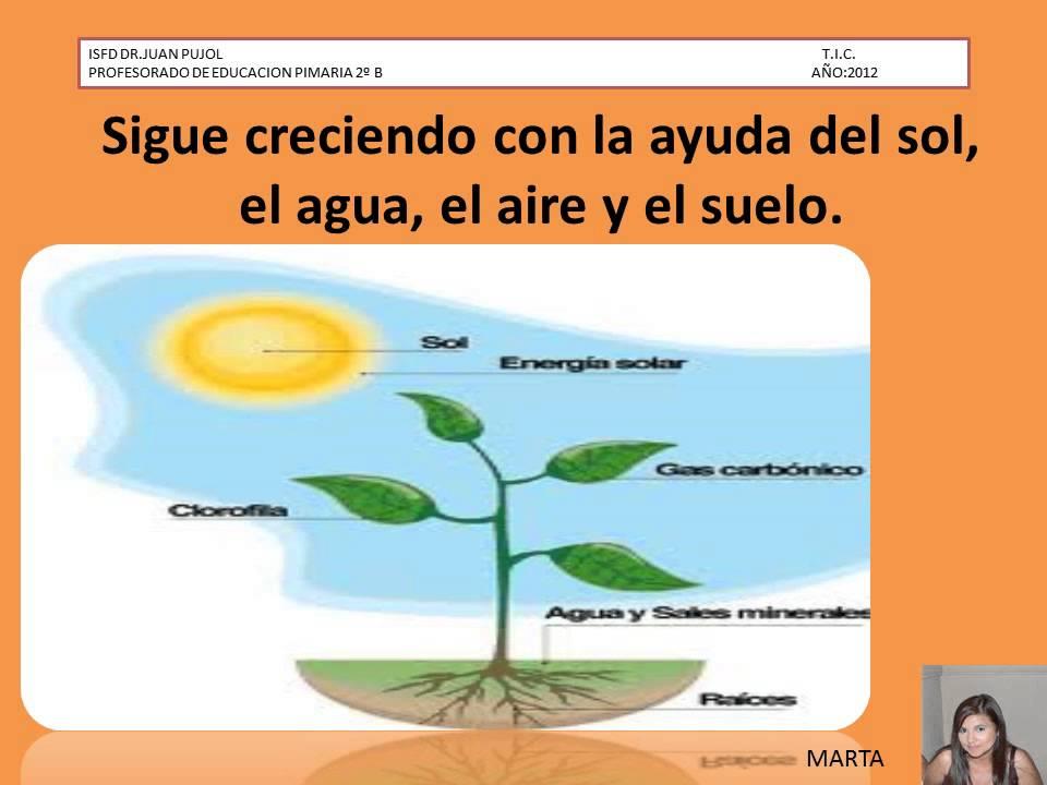 Las partes de las plantas y sus funciones claudia doovi for Funcion de las plantas ornamentales