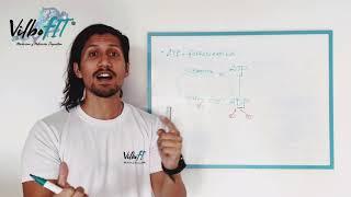 Sistema ATP-Fosfocreatina