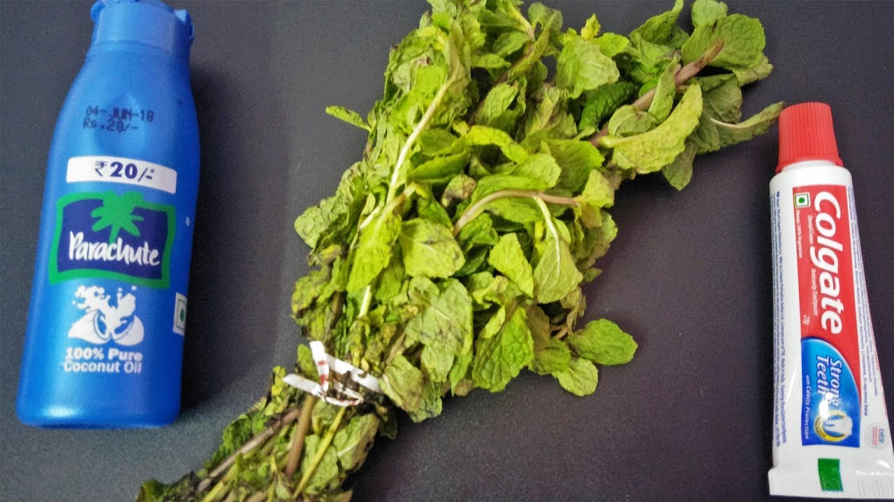NO-DIET NO-EXERCISE LOSS BELLY FAT | Apply Mint Leaves Toothpaste Oil On Stomach For Reduce Fat