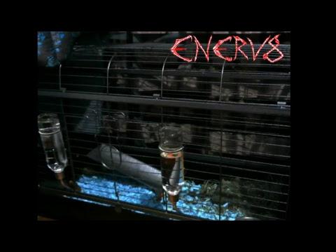 Enerv8 Rock Radio Live Music Stream