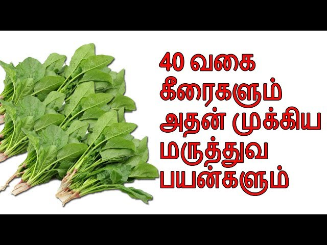 Benefits Of 40 Types Of Greens | Veltvtamil
