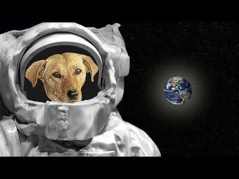 आखिर Laika के साथ क्या हुआ था || The Sad Story of Laika First Dog in Space