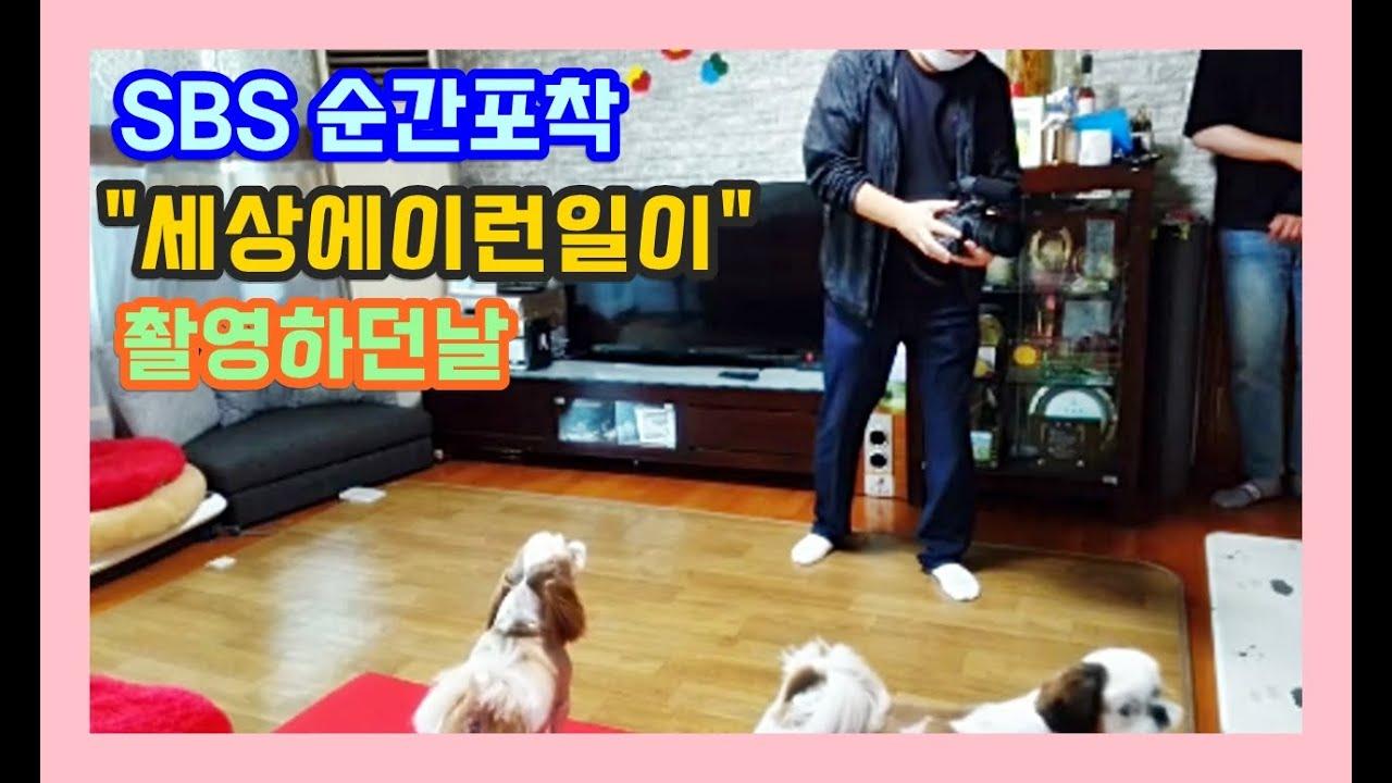 """[시츄.로또하우스] SBS """"세상에이런일이"""" 촬영하던날"""