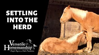 SETTLING INTO THE HERD (with a little drama) // Versatile Horsemanship
